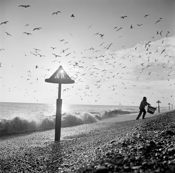ALDEBURGH BEACH, Suffolk. View along the beach showing a line of sea marks and a fisherman with a wicker basket walking up the beach with gulls wheeling overhead. Photographed by John Gay in 1977