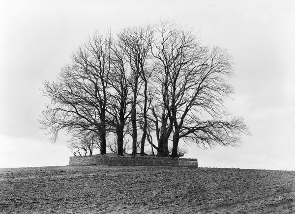 BARROW NEAR BOURTON ON THE WATER, Gloucestershire. A tree-covered round barrow sitting on a hill, surrounded by a dry stone wall. Photographed by Henry Taunt (active 1860-1922)