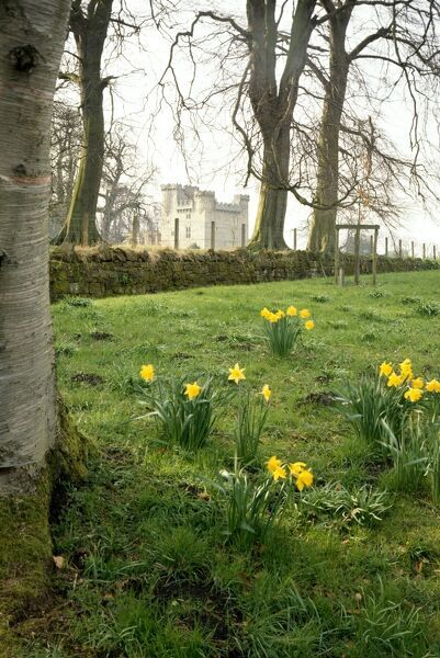 BELSAY HALL, CASTLE & GARDENS, Northumberland. View of the 14th century 'peel tower' through the trees with daffodils in the foreground