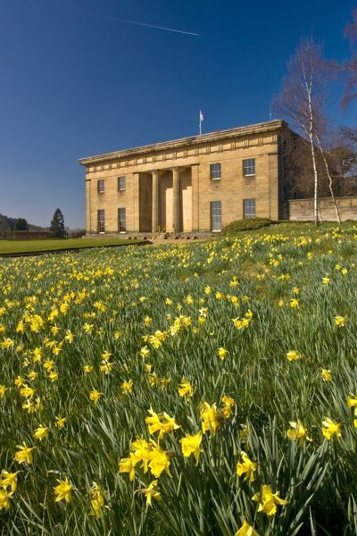 BELSAY HALL, CASTLE & GARDENS, Northumberland. Spring time at Belsay, showing the daffodils in full bloom in front of the hall