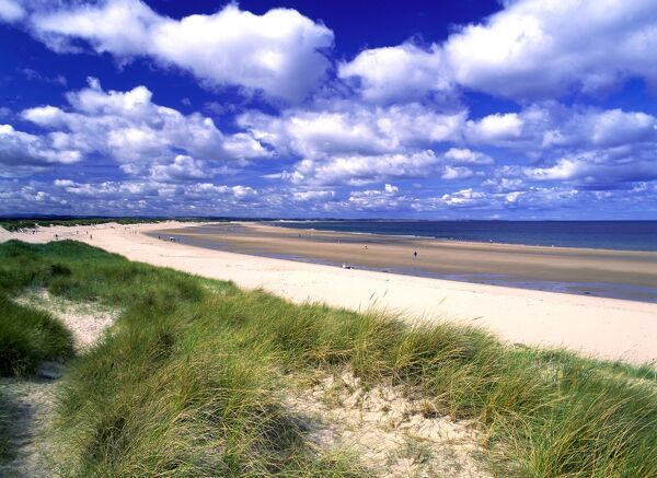 BUDLE BAY, Northumberland. Coastal view of the sandy beach and grassy dunes