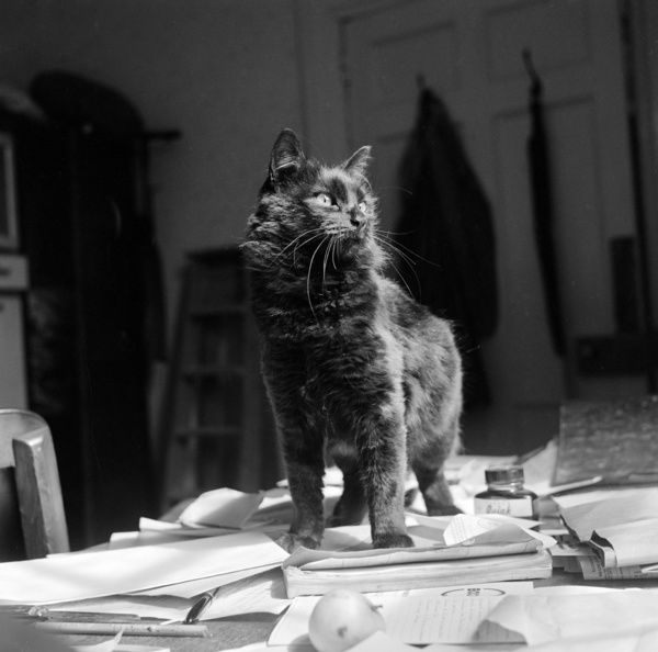 A black shorthair cat stands on papers on top of a desk. Possibly in Newbarn, Isle of Wight. Photographed by John Gay, 1960s