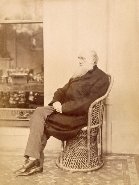 DOWN HOUSE, Downe, Kent. Albumen photograph of Charles Darwin on verandah at Down House taken by his son Leonard c 1880