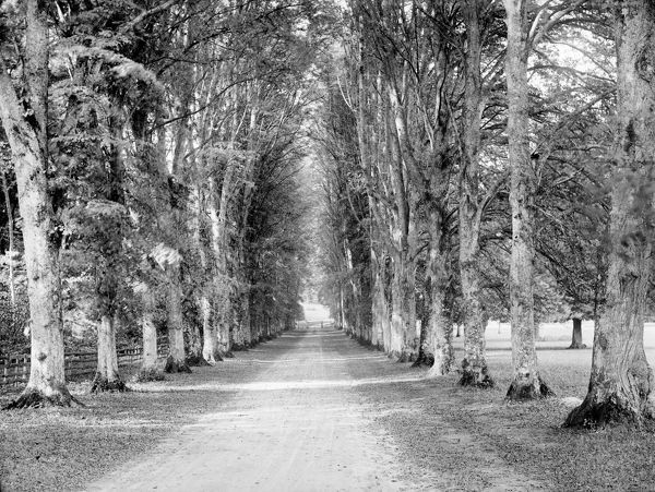 HIGHCLERE CASTLE, Hampshire. Looking down the Dames Avenue towards a gate in the park. Photographed by Henry Taunt (active 1860 - 1922).