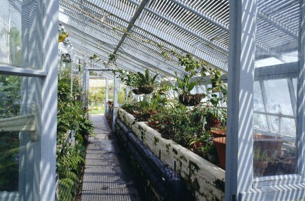 DOWN HOUSE, Kent. Interior view of the greenhouse