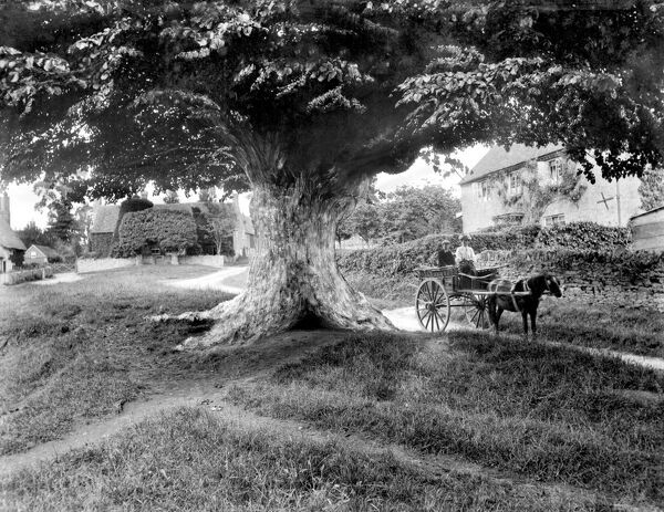 DENTON, Oxfordshire. A picturesque village scene, showing a pony trap with riders underneath a large old tree. There are cottages in the background. Photographed by Henry Taunt (active 1860 - 1922)