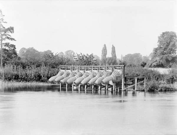 BRAY, Berkshire. A small weir with a channel made from branches with nine eel bucks attached