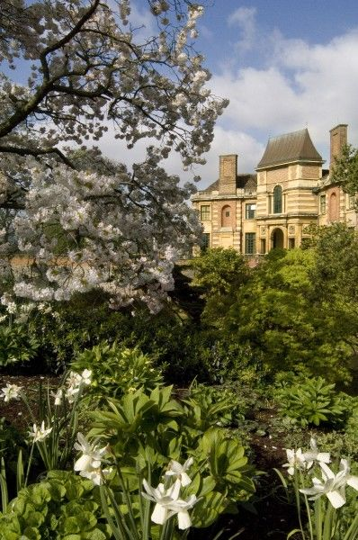 ELTHAM PALACE, London. View towards the house showing the cherry tree and daffodils in bloom