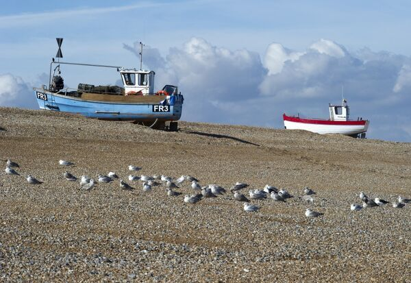 DUNGENESS BEACH, Kent. Fishing boats drawn up on the shingle with seagulls in the foreground