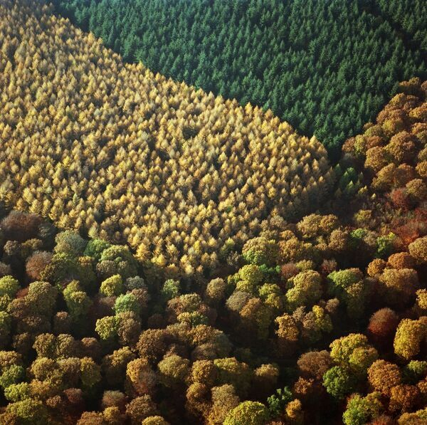 FOREST OF DEAN, Gloucestershire. Aerial view