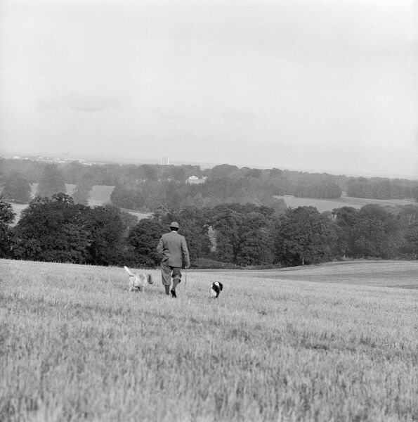 A rural landscape near Basingstoke, Hampshire. A gamekeeper and his dogs walk away from the camera with the skyline of Basingstoke just visible on the horizon. Date range 1960-1980. John Gay