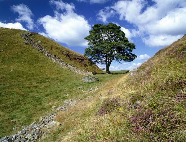 HADRIAN'S WALL, Northumberland. View of Sycamore Gap near Steel Rigg. Used as a film set for Robin Hood Prince of Thieves. hadrian