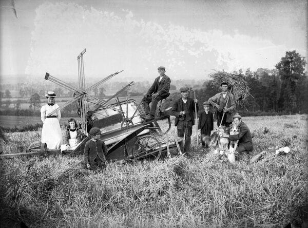 Harvesting with a mechanical harvester near Hellidon, Northamptonshire. Alfred Newton and Son July 1902