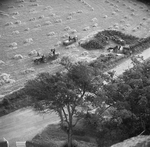 Ranworth, Norfolk. The harvest is seen from the church tower. Despite mechanisation, it is still a labour-intensive task with at least 14 men visible. Photographed by Hallam Ashley September 1954