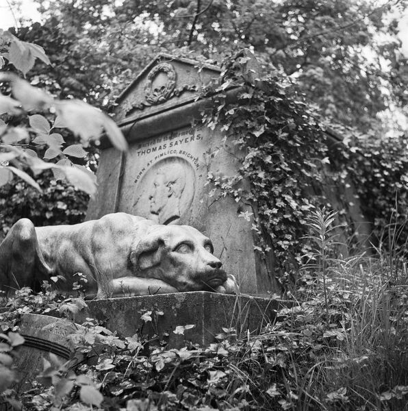 HIGHGATE CEMETERY, West Cemetery, London. The sculpture of a dog guarding the tomb of Thomas Sayers. Photographed by John Gay in 1985