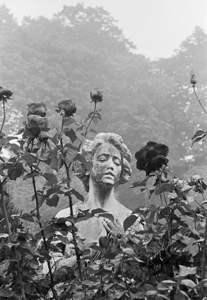 HIGHGATE CEMETERY, Hampstead, London. The statue of a woman 'peeping out' from behind a rose bush growing in the East Cemetery. Photographed by John Gay in 1980s/90s