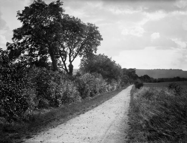 HODCOT LANE, West Ilsley, Berkshire. Looking down a rural lane towards the West Ilsley Downs in the distance. Photographed in 1895 by Henry Taunt