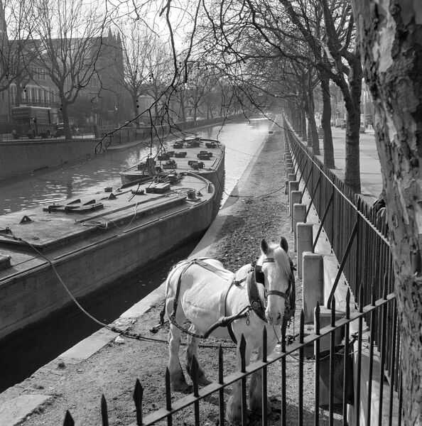 GRAND UNION CANAL, Paddington, London. A white horse tethered to railings on the tow path by two moored canal barges. Photographed by John Gay. Date range: January 1962 - May 1964