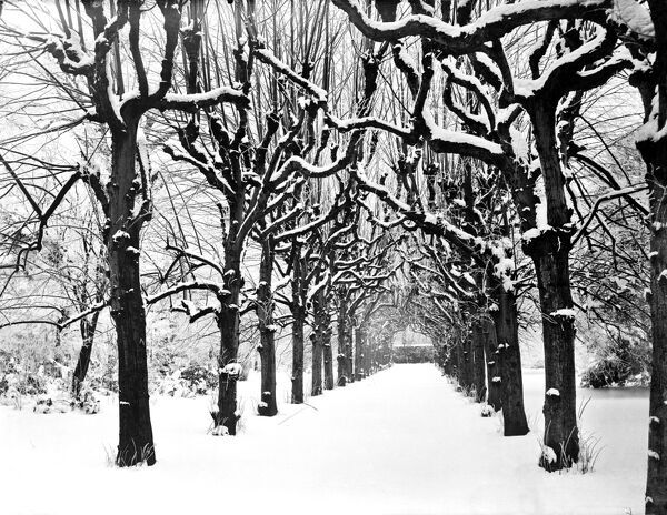 TRINITY COLLEGE, Oxford, Oxfordshire. Looking down the Lime Walk in the college grounds under a heavy covering of snow. The walk probably dates to the 1680s when formal parts of the garden were laid out. Photographed by Henry Taunt in 1880