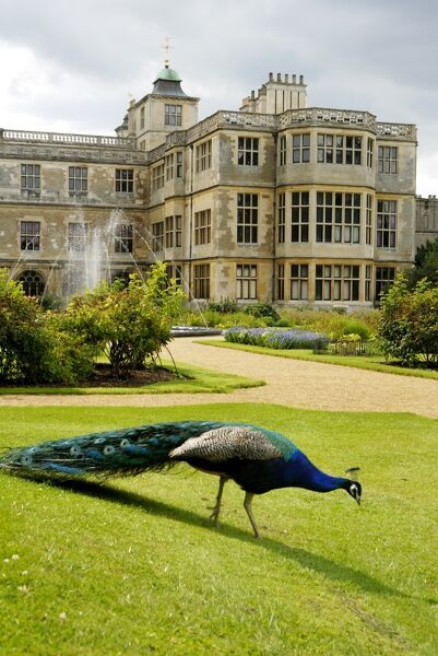 AUDLEY END HOUSE AND GARDENS, Essex. The East front and parterre garden with a peacock and the fountain