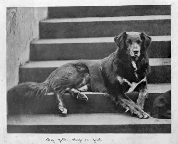 "OSBORNE HOUSE, Isle of Wight. The Ryde Album. Queen Victoria's collie dog - Noble. ""Always on guard&quot"