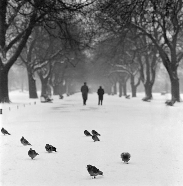 REGENT'S PARK, London. Pigeons standing on a snowy path with two people behind walking away through an avenue of trees. John Gay. Date range: 1960-1965