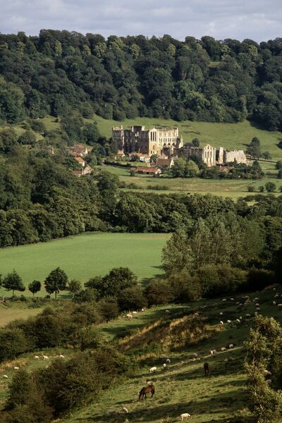 RIEVAULX ABBEY, North Yorkshire. General view of the abbey showing its picturesque countryside landscape