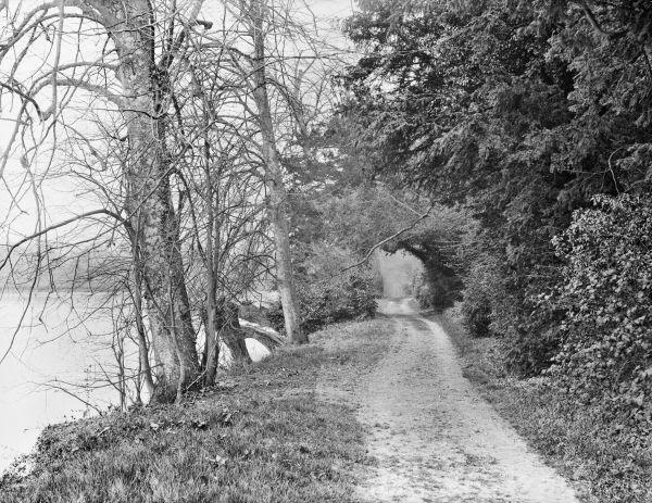 CLIVEDEN, Taplow, Buckinghamshire. Looking along the small wooded track that runs along the bank of the River Thames. Photographed in 1883 by Henry Taunt