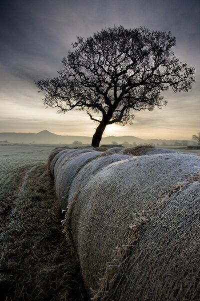 ROSEBERRY TOPPING, North Yorkshire / Cleveland. View across Morton Carr towards Roseberry Topping on the horizon with hay bales and tree on a frosty, misty winter morning. Sunrise