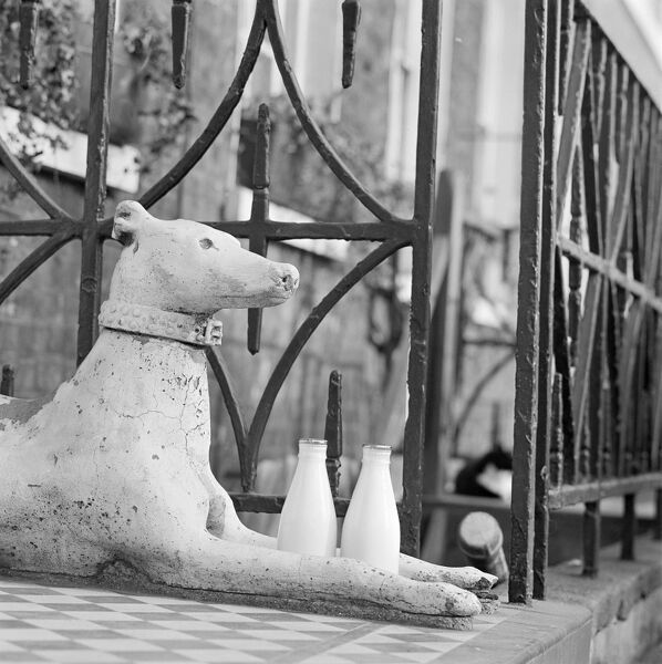 DUNCAN TERRACE, Islington, Greater London. A stone greyhound lying on tiles in front of railings guarding two milk bottles by the front entrance of a house on Duncan Terrace. Photograph by John Gay. Date range: January 1962 - May 1964