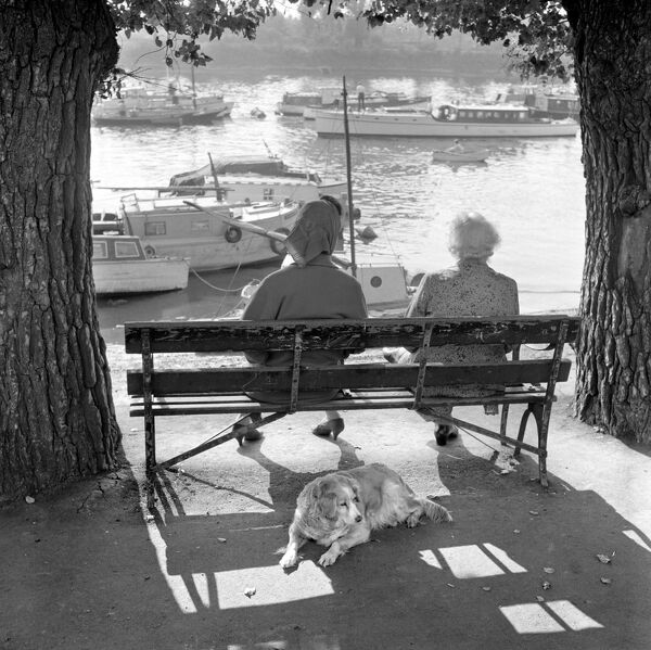 STRAND ON THE GREEN, Chiswick, London. Rear view of two elderly women seated on a bench between trees overlooking boats moored on the River Thames. Also, a dog lying in the shade behind the bench. Date range January 1962 - May 1964. John Gay
