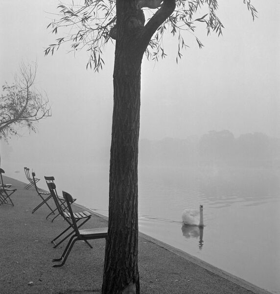 A swan on the water and a row of chairs on the bank of a lake in one of central London's parks in the mist. John Gay. Date range: 1960 - 1965