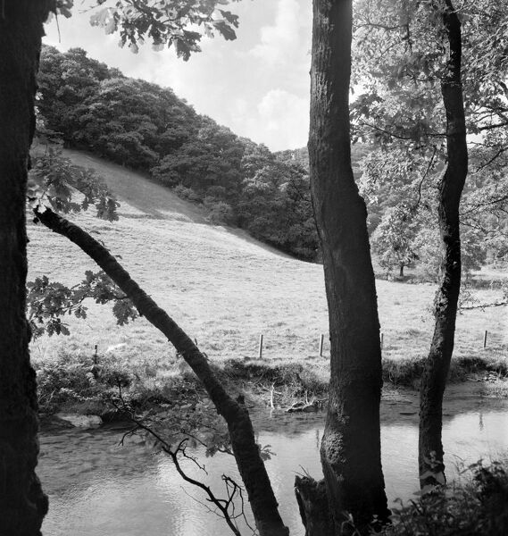 A view from a wooded riverbank with tree trunks in the foreground, looking over a calm stretch of river to a field and hillside woodland. Possibly shows the River Barle near the Tarr Steps clapper bridge in West Somerset. Photographed by John Gay