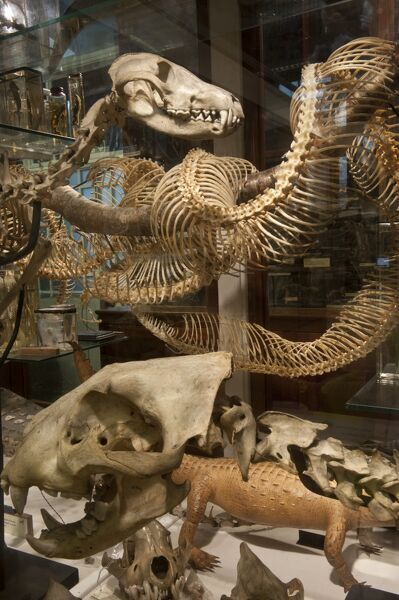 The Grant Museum of Zoology, University College London, Rockefeller Building, Universtiy Street, Camden, London