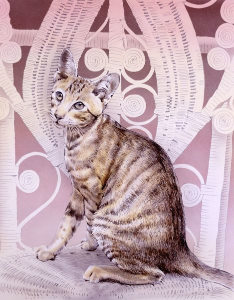 An Abyssinian cat sitting on a whicker chair. Painting by Malcolm Greensmith