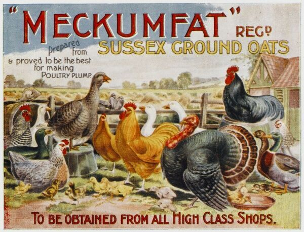 Advertising poster for the fabulously named 'Meckumfat' Sussex Ground Oats - '...proved to be the best for making poultry plump'!