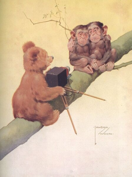 A colour illustration by artist Lawson Wood showing a bear photographing two little monkeys up on a tree branch. The picture originally appeared in 'Winter's Pie', a charitable publication, produced by the Illustrated London News