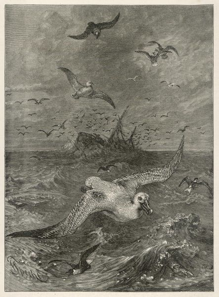 (diomedeida) An albatross hunts for food in the midst of a storm, as a ship founders nearby