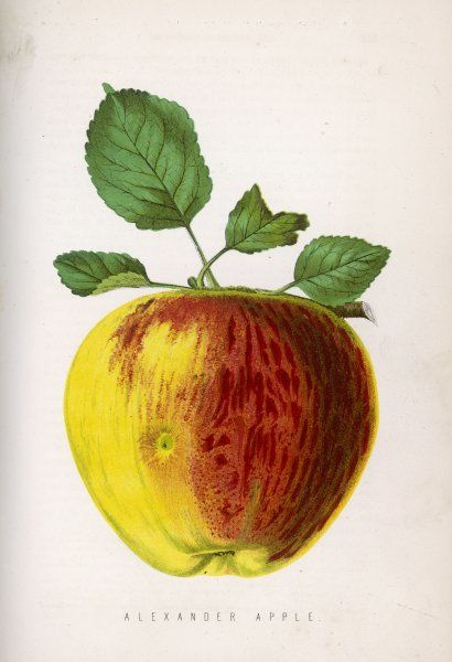 An Alexander apple (with a blemish)