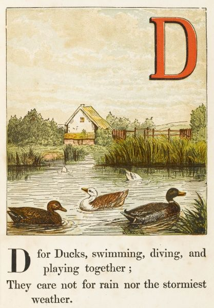 'D' - for ducks, swimming, diving, and playing together