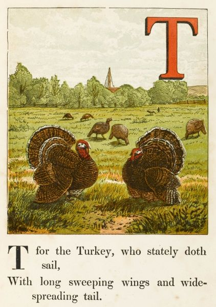 'T' for the turkey, who stately doth sail