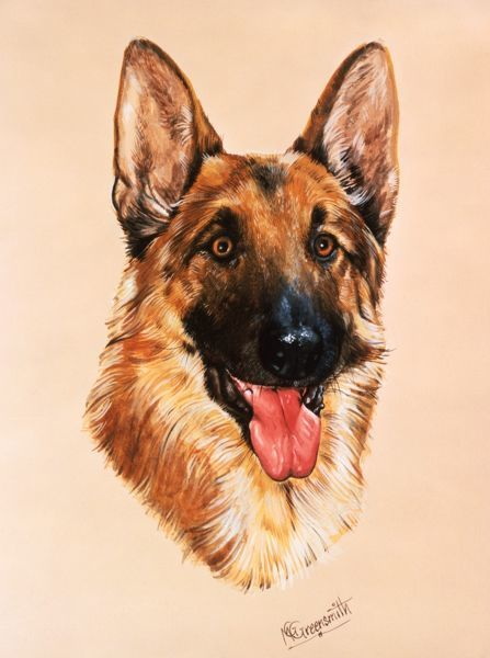 A portrait painting by Malcolm Greenwmith of an Alsatian Dog, also known as a German Shepherd
