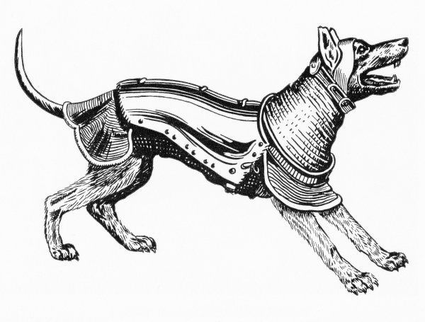 A dog in armour, to accompany its master into battle