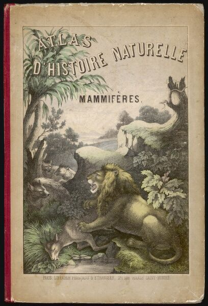 Front cover design, showing a lion and its prey, and a group of hyenas in a landscape