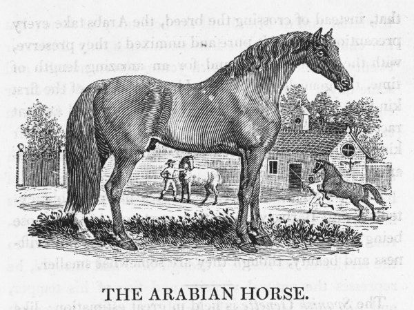 'THE ARABIAN HORSE' 'There is scarcely an Arabian, how poor soever in other respects, but is possessed of his horse, which he considers as an invaluable treasure.&#39