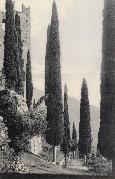 The ruins of the Castle and the distinctive hillside Cyress Trees at Arco, above Lake Garda, Italy Date: circa 1910s