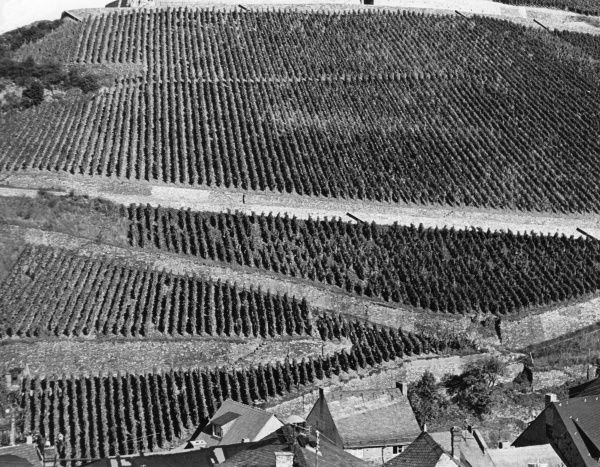Vineyards at Assmanshausen (red wine district), Rhine Valley, Germany. Date: 1980s
