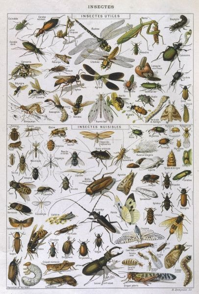 Insects divided into their two kinds, useful and harmful. There's no such thing, it seems, as an insect that's sometimes one, sometimes the other, or not really either