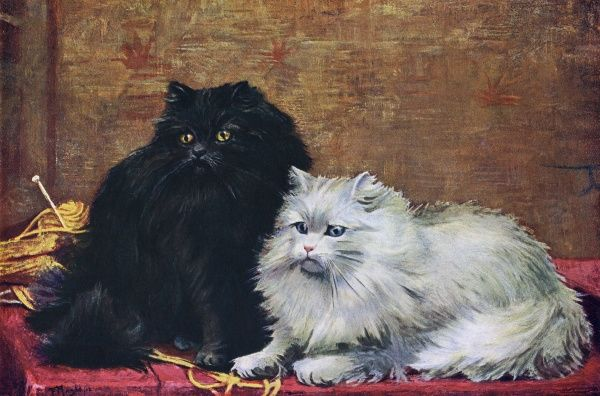 Two Persian cats sit together, one black and one white. Date: 1903