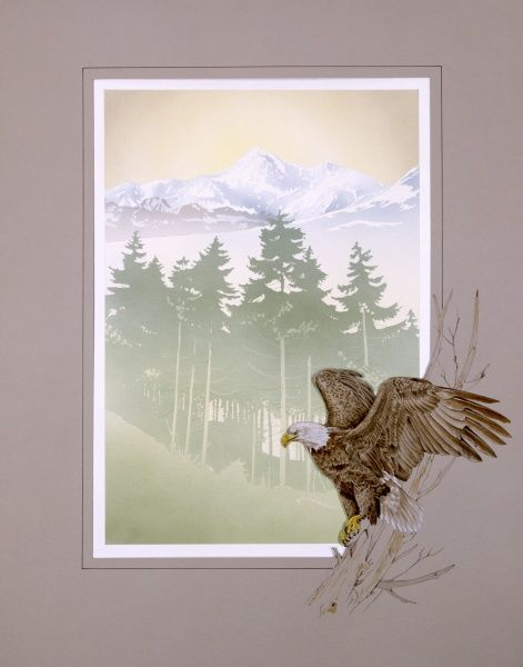 A bald eagle is set into the border framing this light, atmospheric view of mountains, seen through the green silhouettes of fir trees on the lower slopes. Painting by Malcolm Greensmith